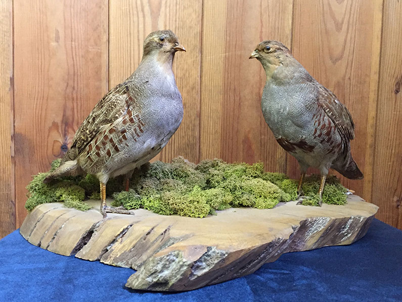 Taxidermy Bird group